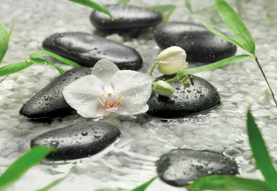 fototapete pure 368x254 feng shui weisse orchidee steine. Black Bedroom Furniture Sets. Home Design Ideas