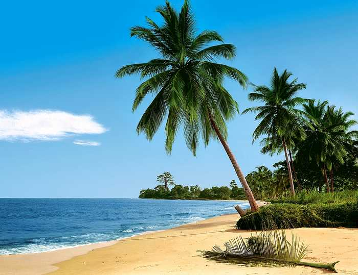 fototapete african beach 388x270 strand palmen see afrika sand sonne blaues meer ebay. Black Bedroom Furniture Sets. Home Design Ideas