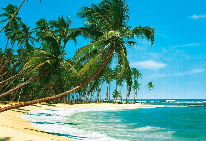 Fototapete tropen  Fototapete SÜDSEE 366x254 Strand Palmen Karibik Insel Pazifik ...