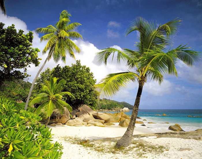 Fototapeten Palmenstrand : Fototapete PRASLIN 368×254 Palmenstrand Seychellen Strand Palmen Ozean
