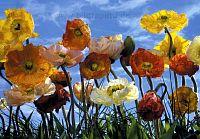 Motivtapeten, Blumen, Citymotive, Universum