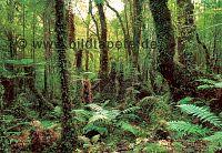 Waldtapeten, Wiesen, Berge, Seen